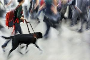 Ledarhund i arbete
